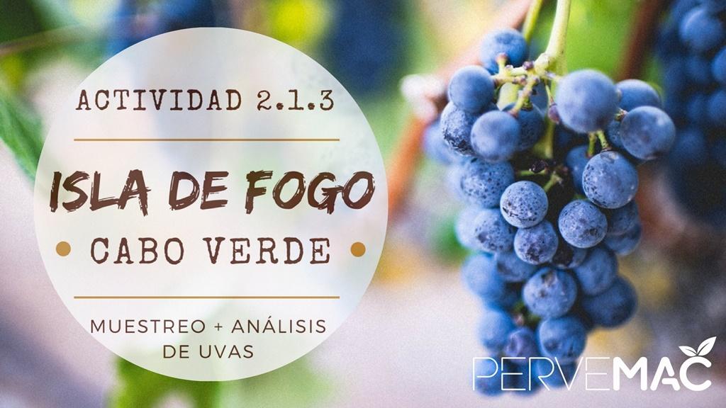 RECOGIDA DE MUESTRAS DE UVA EN FOGO CABO VERDE. 21/09/2017