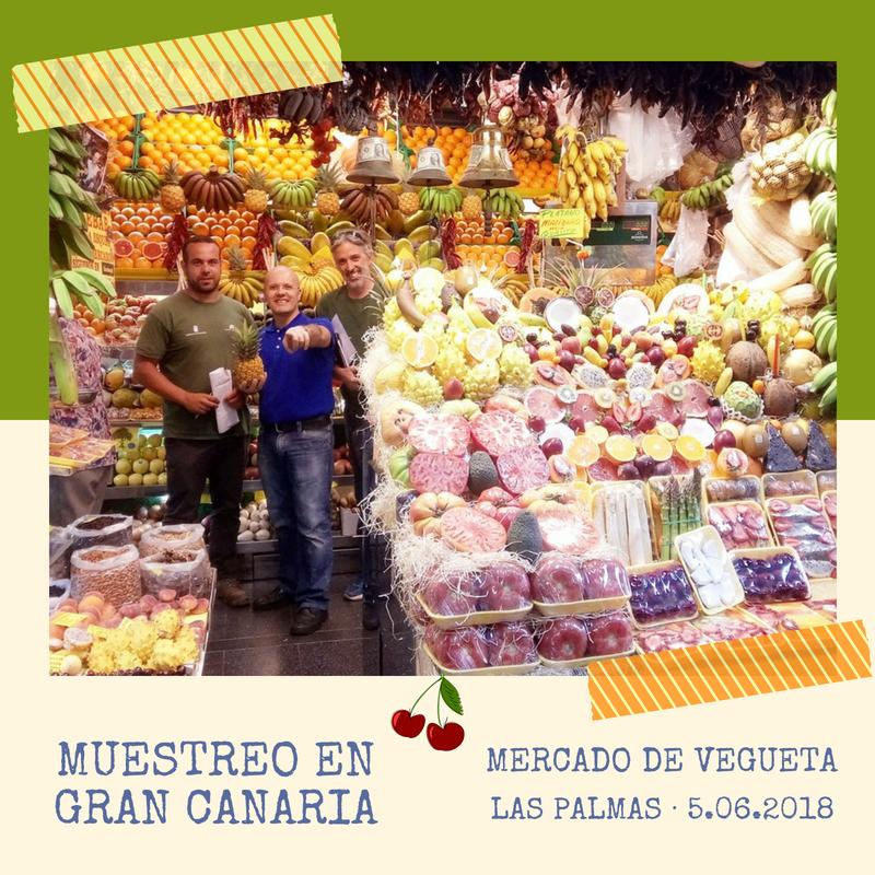 Muestreo en Gran Canaria