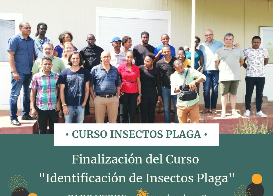 Insectos Plaga Cabo Verde